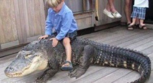 crocodile is not a pet